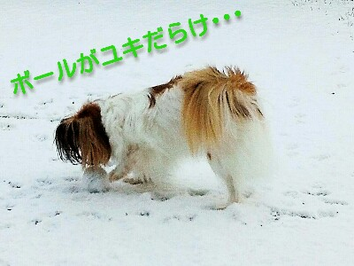 Fotor_148876768865082-400x300.jpg
