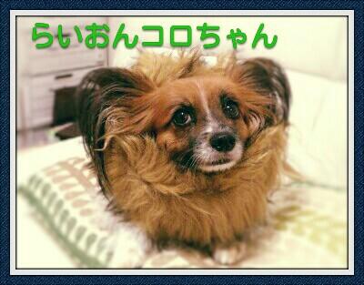 Fotor_14883548729904-400x313.jpg