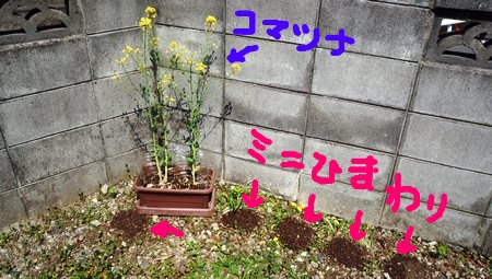 PHOTO_20140409_102907.jpg